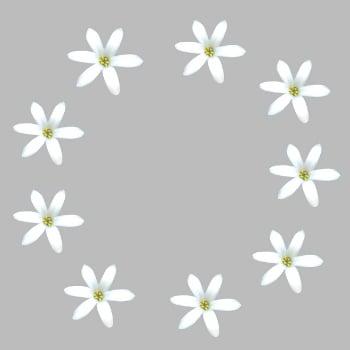 ९ फुलांची वर्तुळाकार पुष्परचना