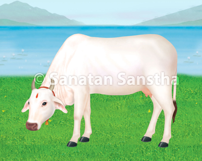 indian_cow